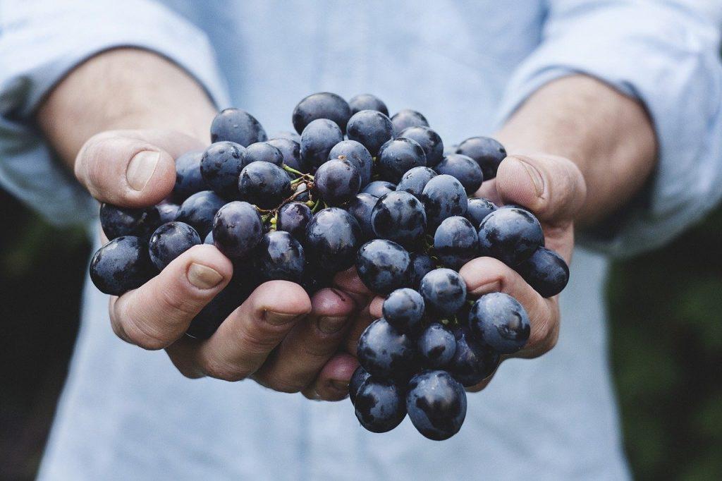 grapes, bunch, fruit