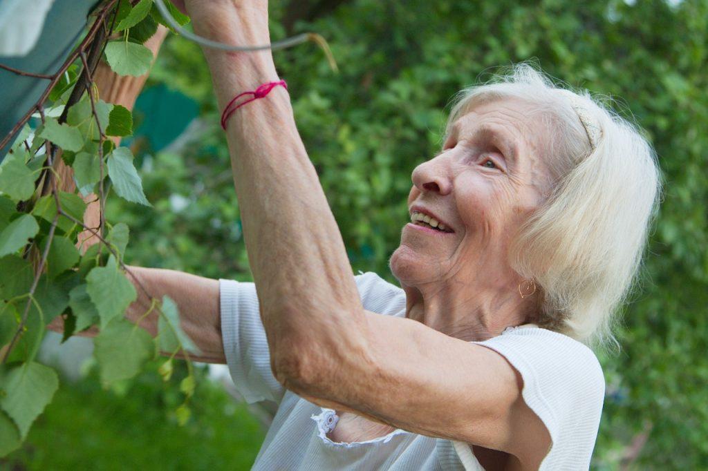 the old lady, grandma, garden